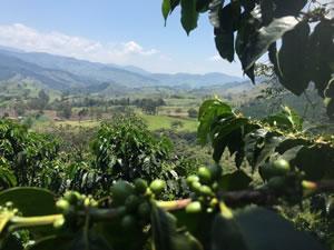 Foto de Café de Colombia